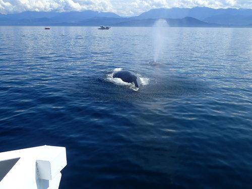 海上賞鯨魚